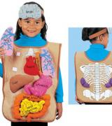 My Body Activity Apron with 3D Organs