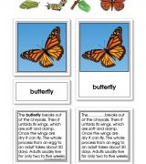 Monarch Butterfly Life Cycle Activity Set