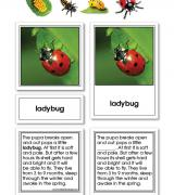 Ladybug Life Cycle Activity Set