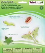 Life Cycle of a Luna Moth - 4 Realistic Models