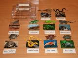 Reptiles Matching Set with 10 Objects and Picture Cards