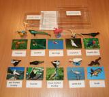 Exotic Birds Set with 10 Objects and Picture Cards