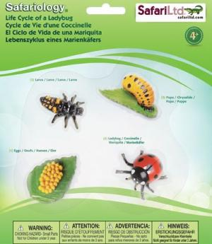Life Cycle of a Ladybug - 4 Realistic Models