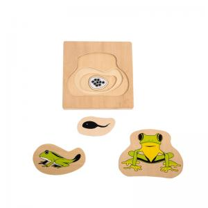 Growth and Layer Puzzle – Frog