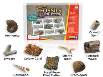 Earth Science - Fossil Collection